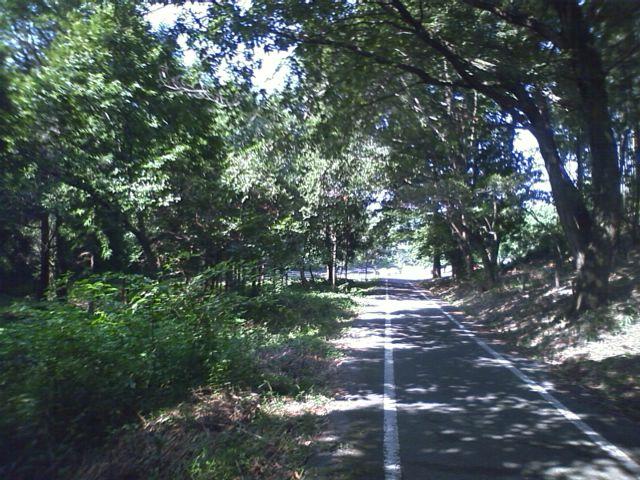 奈良市サイクリングロード
