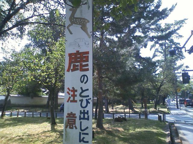 奈良公園なう