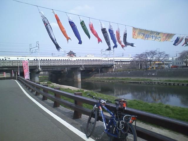 桜の名所清洲城 まだ桜は一分咲きがほとんど