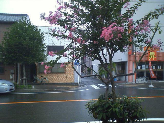 名古屋駅から自転車で走り出したら雨が降り出して、自転車10分で家なのに雨宿り。