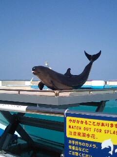 t*[旅]15k 海洋博公園